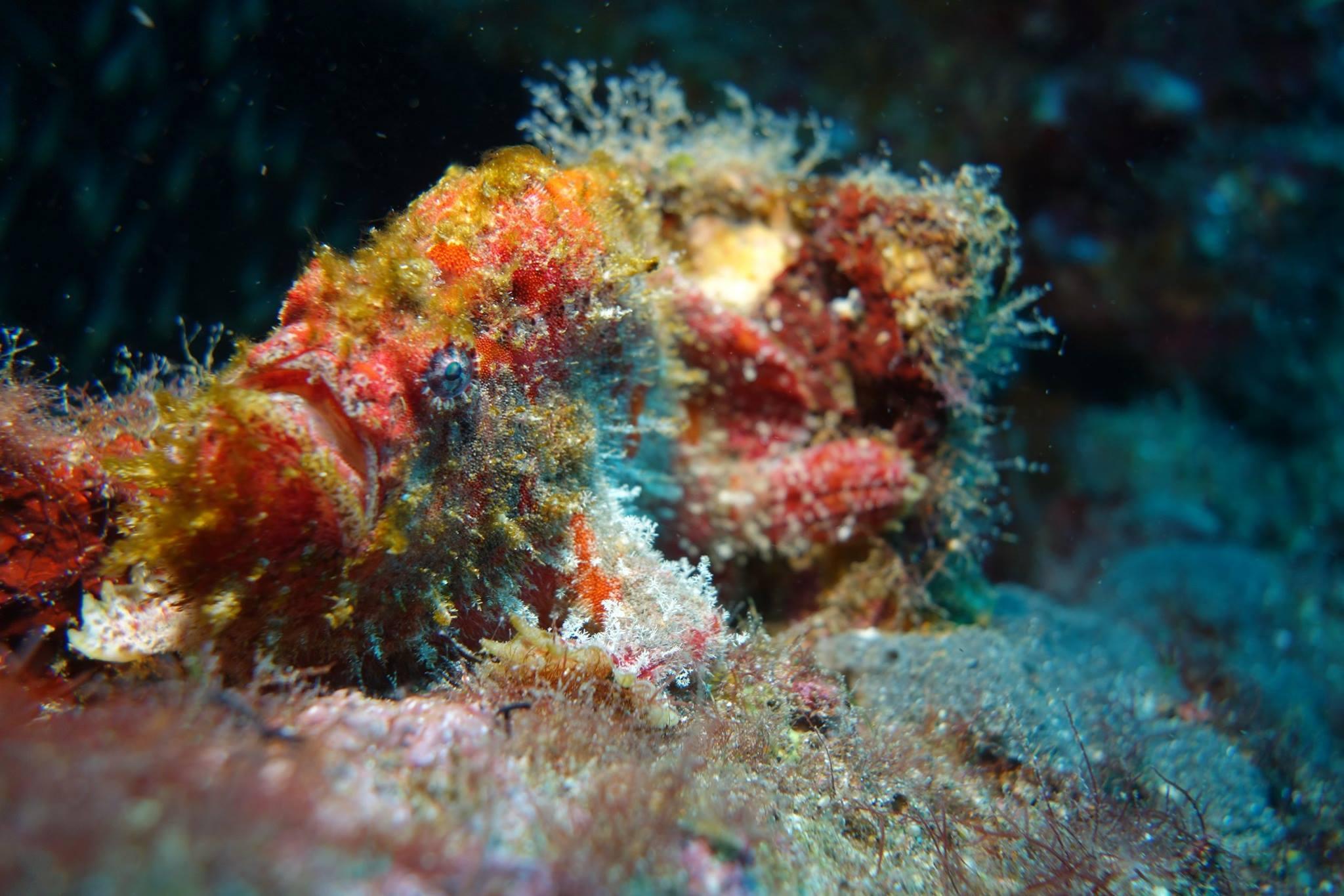 santana-diving-phuket-02