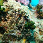 santana-diving-phuket-03