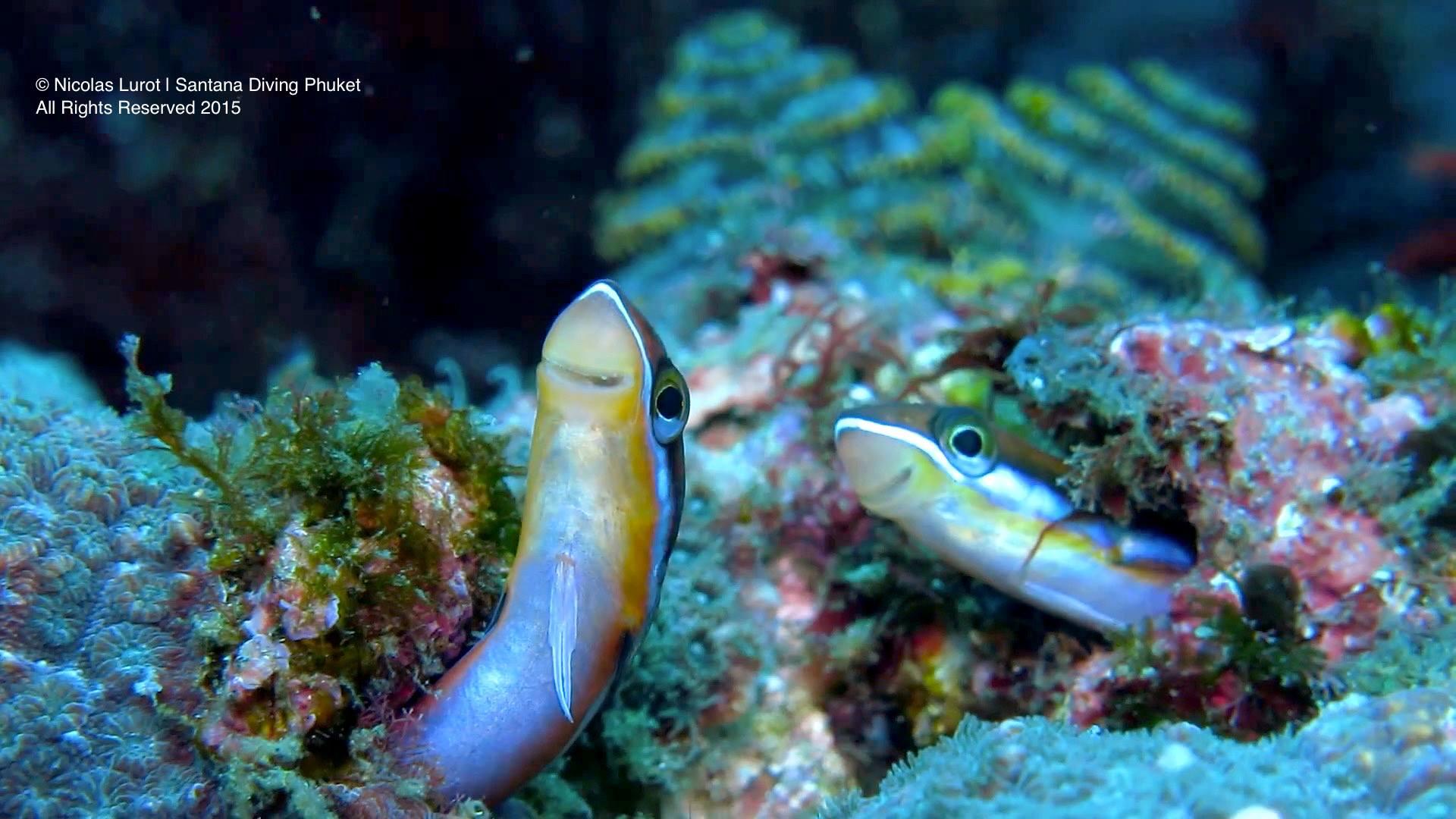 santana-diving-phuket-07