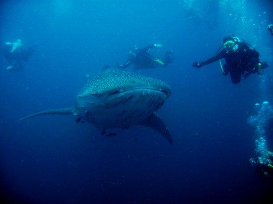 santana-diving